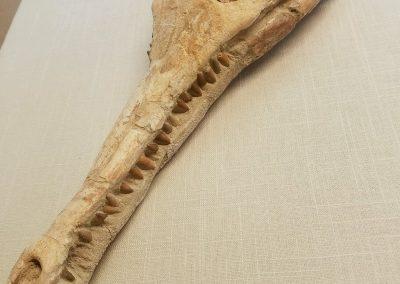 Animal Skull Frame